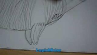 Drawing Horses / Dibujando Caballos