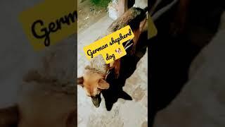 German shepherd dog 🐕 || Attitude wha whatsapp status|| very nice 😊 beautiful pictures and videos