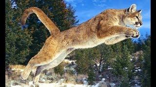 Хищники Африки  Грациозные охотники