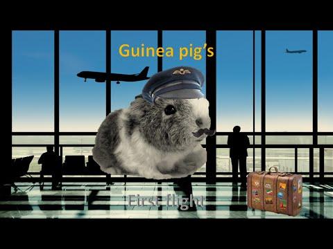 Guinea pig's first flight