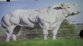 """Konferencja rolnicza """"Innowacje w chowie i hodowli bydła mięsnego"""""""