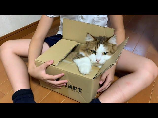 箱を見ると飛び込む猫がかわいい