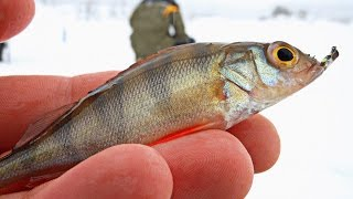 видео Ловля окуня на мормышку зимой - тактика и стратегия » Я Рыболов