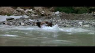 The Bear (L'Ours) 1080p HD