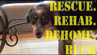 Rescue.rehab.rehome: Nervous/fearful Border Collie - Buck Pt. 1