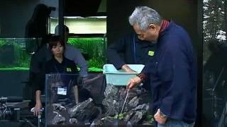 Природный аквариум Такаши Амано(В чем же магия аквариума от Амано, тайна его притягательности, подтверждаемая ростом популярности концепци..., 2012-01-03T10:35:37.000Z)
