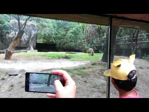 16/04/2017 En el ''''Chapultepec Zoo''