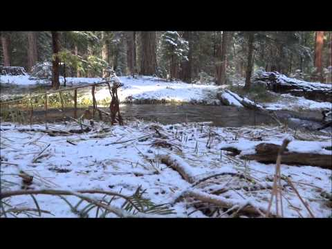 Spawning Brown Trout In Last Chance Creek, Lake Almanor, CA
