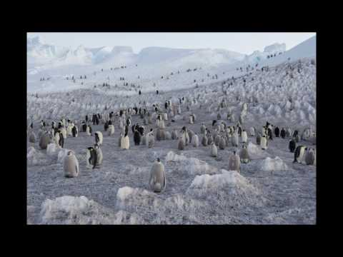 Vincent Munier, Expédition Antarctica - Salon de la Photo 2016