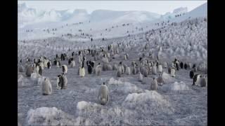 Vincent Munier, Expédition Antarctica - Salon de la Photo 2016