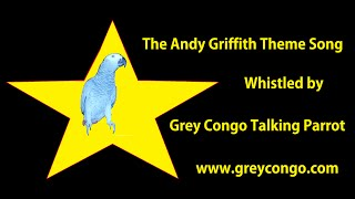 "Bird Whistles Andy Griffith Theme TV Song ~ Whistling Grey Parrot ""Grey Congo"""