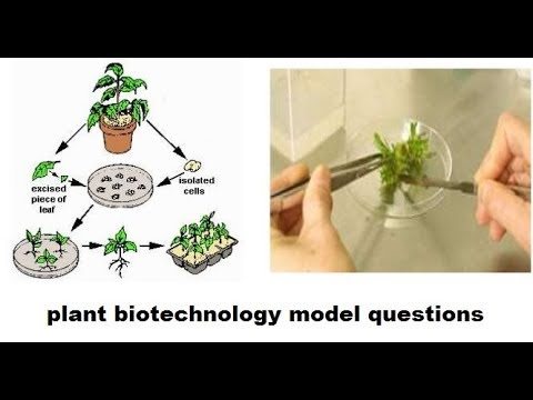 Plant biotechnology model questions(MCQs) for IBPS Agriculture field officer,ICAR JRF,  RHEO, RAEO