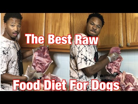 XL pitbull puppies eating raw meat