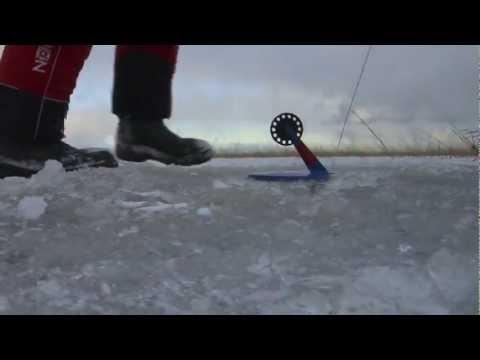 ладожское озеро ловля на жерлицы