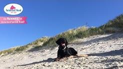 Ferien mit Hund auf Borkum - Strand, Dünen, Wattenmeer und Wiesenlandschaften