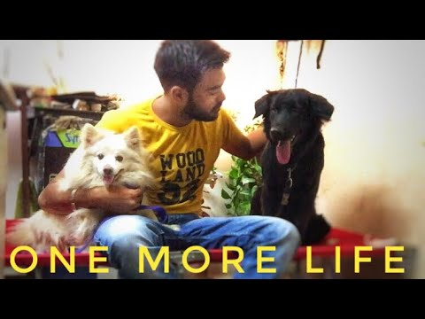 Got new Dog | Expanded My Pet Collection | Kaala Black Retriever