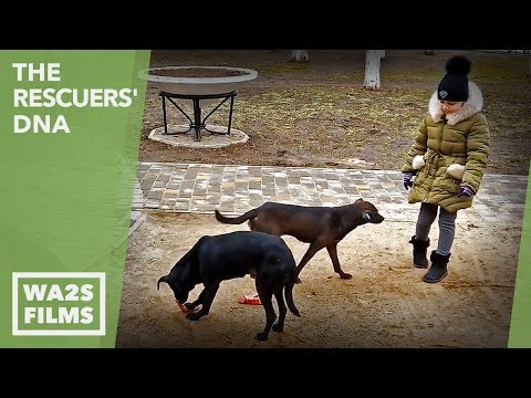 Watch Homeless Dogs Run Everywhere In Odessa Ukraine! The Rescuers' DNA - Hope For Dogs | My DoDo