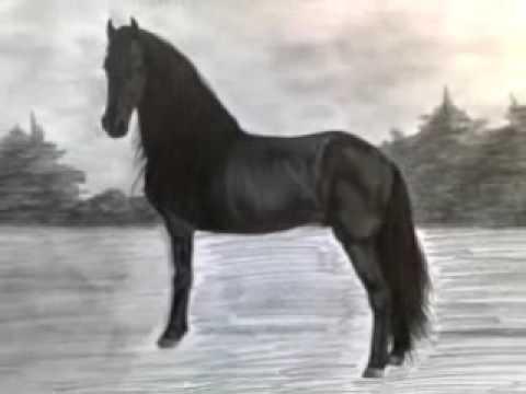 Disegno cavallo nero a matita fra2 youtube for Disegni di cavalli a matita