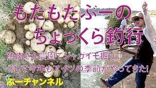 もたもたぶーのちょっくら釣行 魚肉さん農園でジャガイモ掘り♪ そして今年もアイツの季節がやってきた!  FISHING & EAT 【ぶーチャンネル(boo channel)】 thumbnail