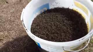 Испытания ловушки для комаров Аэро в Кировской области