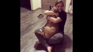 感動の再開🐶数年ぶりに飼い主に会う犬の反応 - 2018まとめ#2