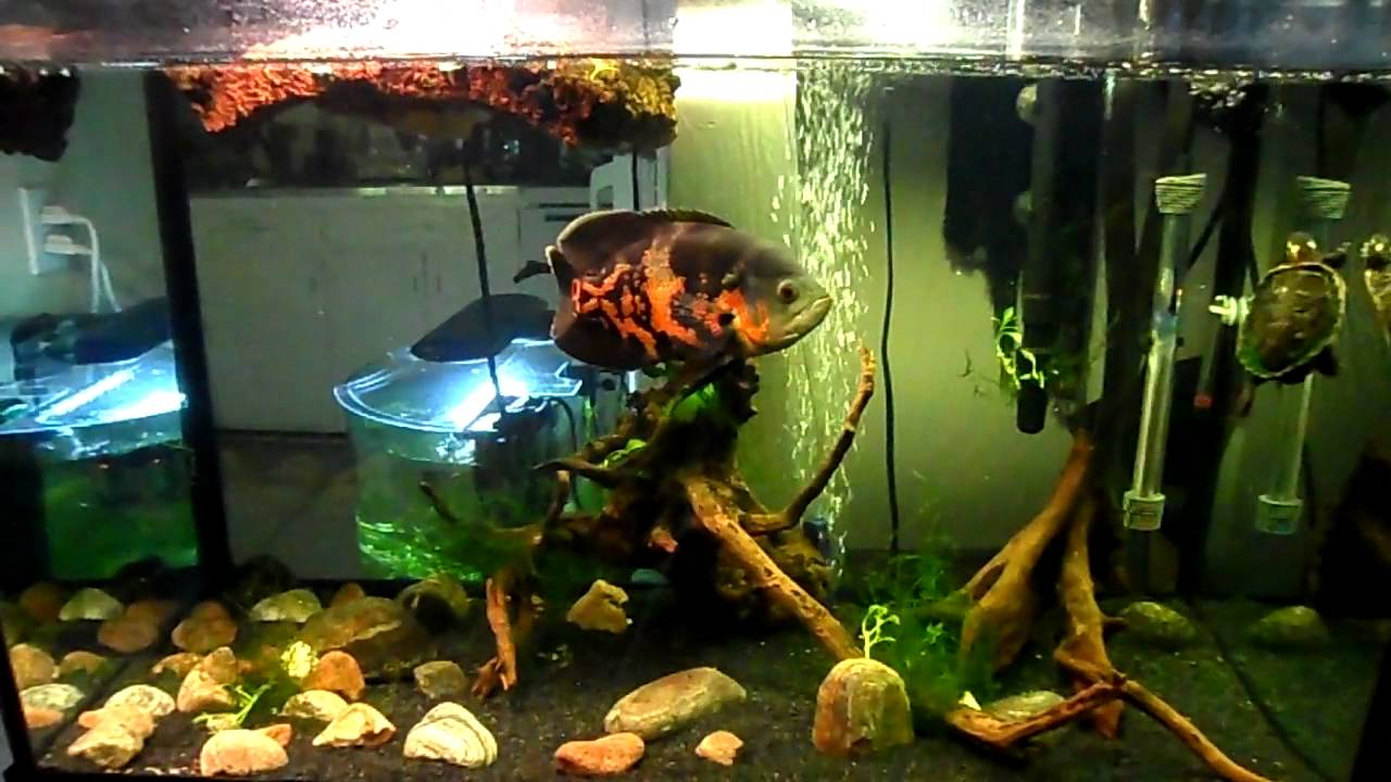 Where To Buy Fish And Fish Tanks