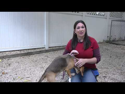 Teaching Puppies Not to Eat off of Dirt : Dog Training Tips