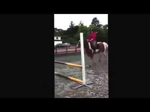 My little tank❤️ hazelden equestrian centre