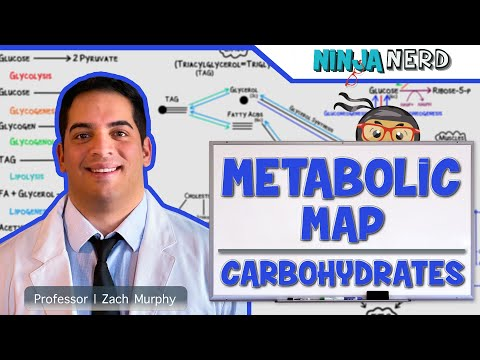 Metabolism | The Metabolic Map: Carbohydrates | Part 1