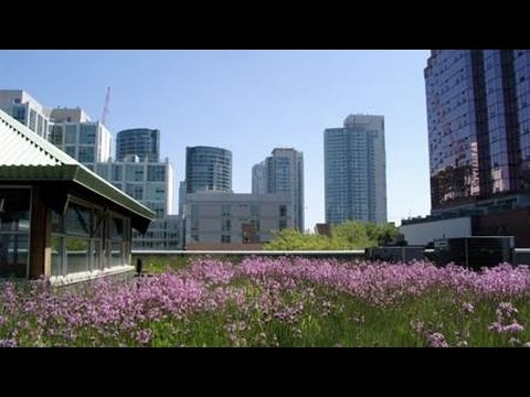 Green Infrastructure in the City - Part I