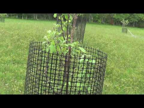 MAY 28 2017 APPLE TREE PLOT FOR DEER.