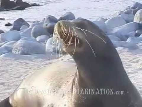 Kids Ocean Movie Sample Chapter - Sea Lions - Ocean Products For Kids