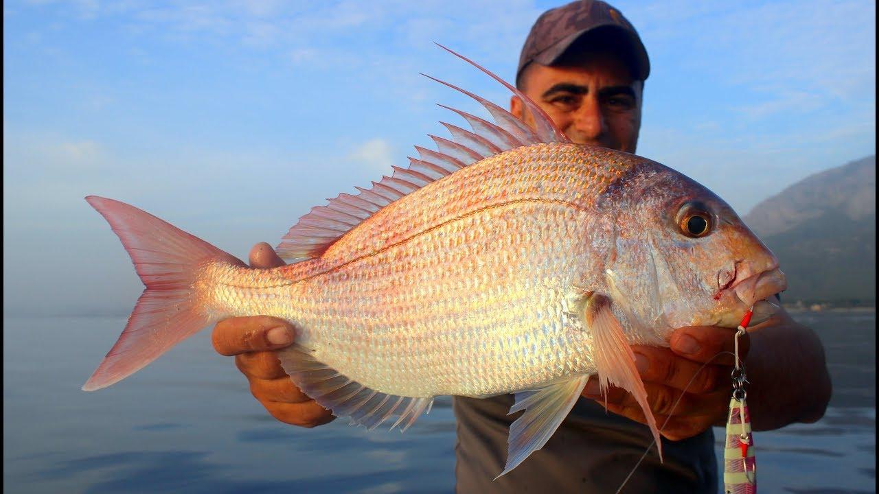 Hayallerimin Balığı Antenli Fangri / My Dream Fish Bluespotted Seabream