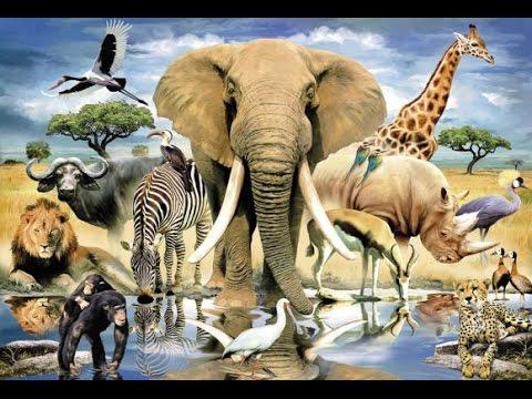 СБОРНИК мультфильмов про животных для детей. Тигры, слоны, леопарды, медведи и многие другие