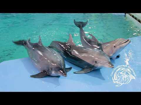 Плавание с дельфинами в Санкт-Петербургском Дельфинарии на Крестовском
