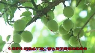 日式《歸園田居》:晚年生活里的小清新 英子夫人 検索動画 5