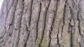 боль кора дерева имитация видео ютуб почувствовавшие свободу две