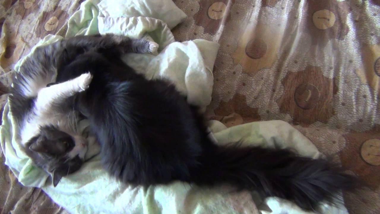 Котенок плохо сосет сиську