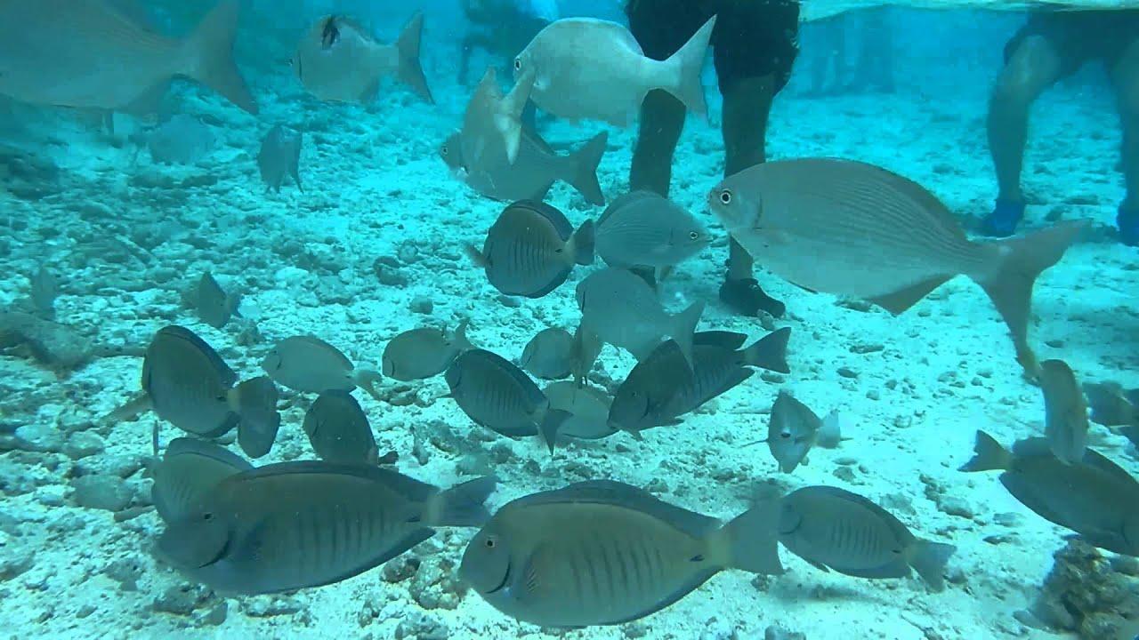 El acuario san andres islas colombia youtube - El colmao de san andres ...
