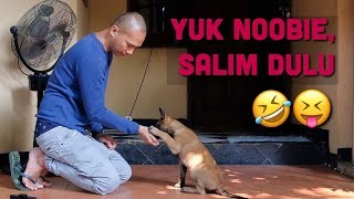 Download Video NGAJARIN NOOBIE TRICK BARU! | ANUBIS THE BELGIAN MALINOIS MP3 3GP MP4