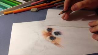 Чихуахуа [2] | Chihuahua [2]
