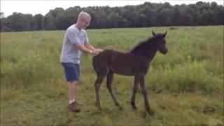Милый жеребенок. Nice foal. Funny animals. Смешные животные лошади