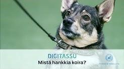 Mistä hankkia koira