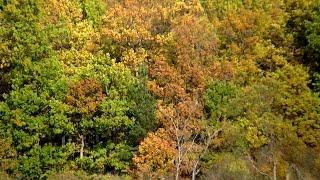 Лес точно терем расписной
