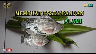 Cara Membuat Essen Pandan Alami Campuran Lumut Umpan Ikan Nila Dan Mujair Youtube