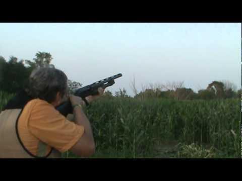 Benelli m2 trap shooting youtube for M2 trap berekenen
