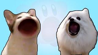 고양이 VS 강아지 ( Pop Cat VS Gabe the Dog )