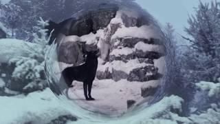 Black wolf and white she-wolf| Чёрный волк и белая волчица