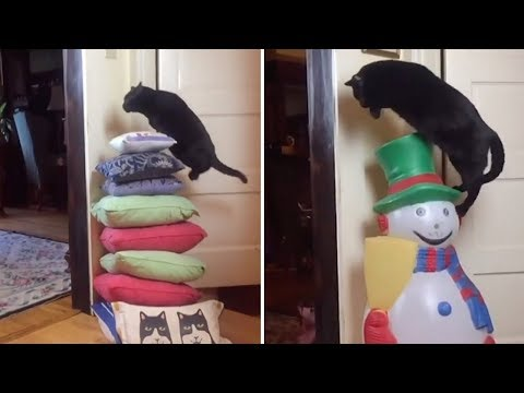Cat Loves Jumping Over Everything