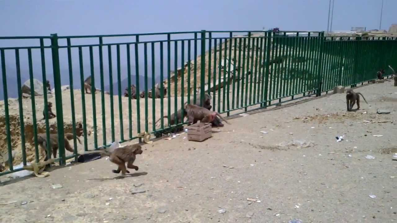 Image result for asir national park abha